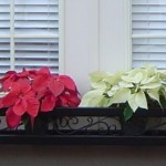 Custom Iron Window Box
